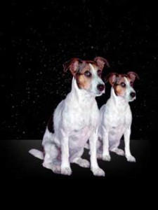 a photo of two dogs for Gemini