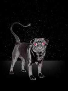 photo of a black dog representing Scorpio