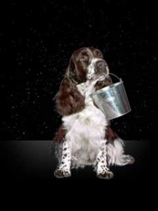 photo of dog representing Aquarius