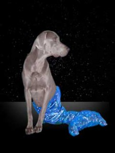 photo of a dog representing the star sign Pisces
