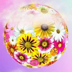 flower universe