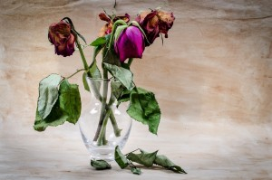 dead flowers, Taurus