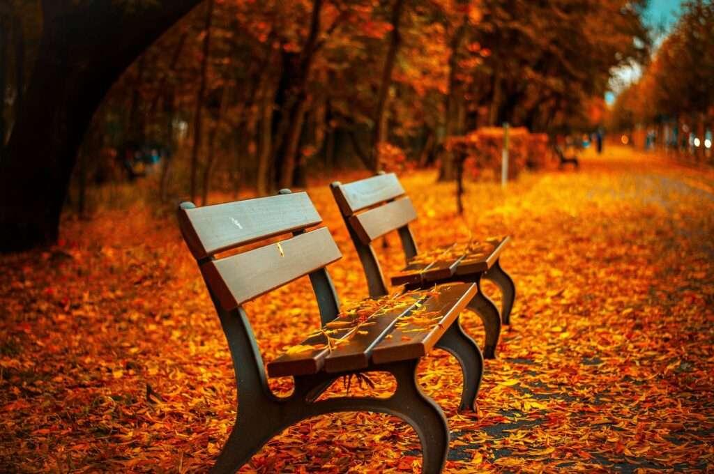 autumn, Scorpio November 2016