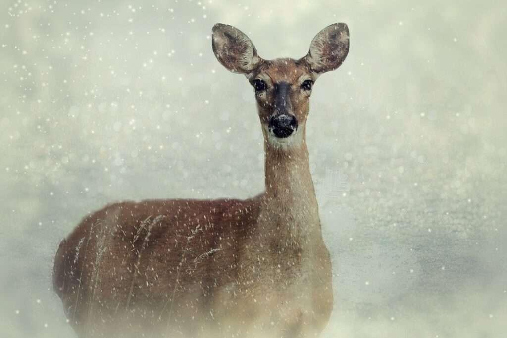 winter, Aries