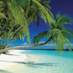 photo of a tropical beach