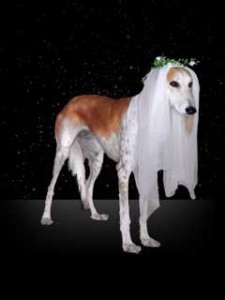 photo of dog representing Virgo