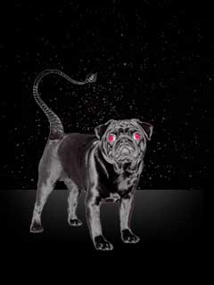a photo of a black dog representing Scorpio