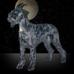 photo of Capricorn dog