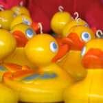 photo of ducks