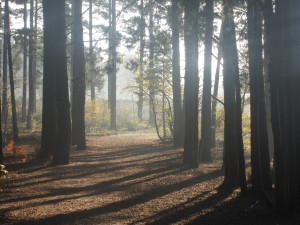 Blackheath Woods, Surrey