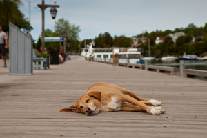 a photo of a tired dog