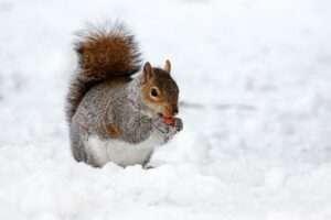 squirrel, snow, Virgo