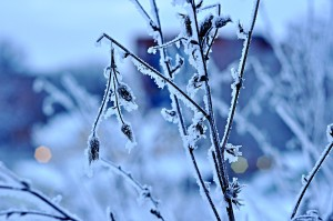 Scorpio, snow