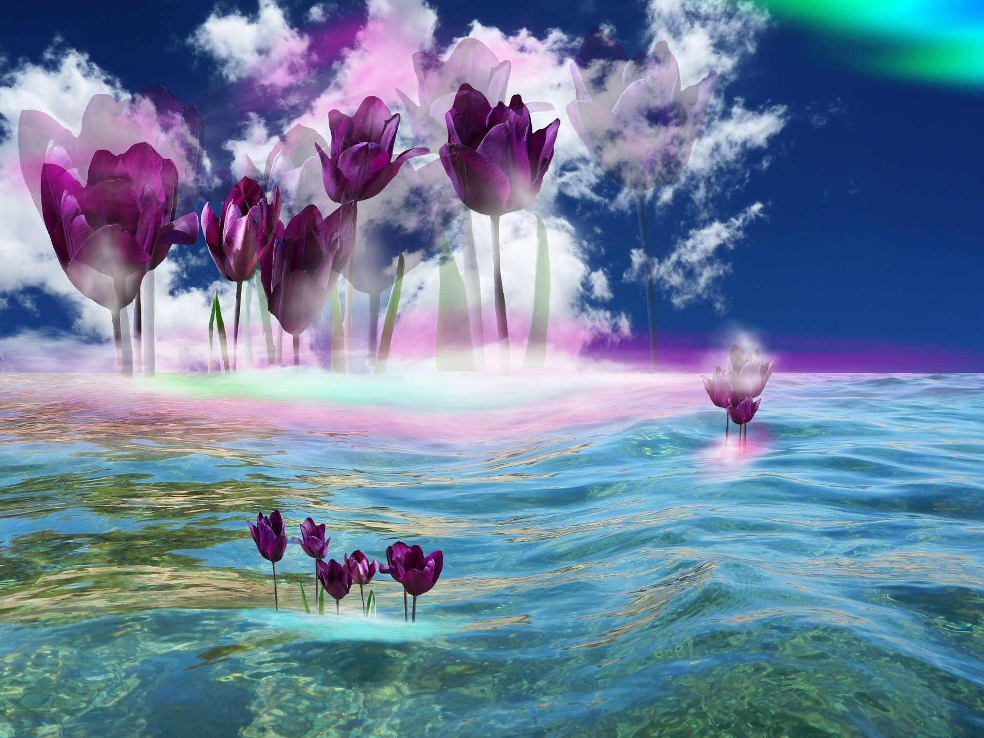Jupiter Libra, tulips