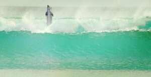 Aquarius, dolphin