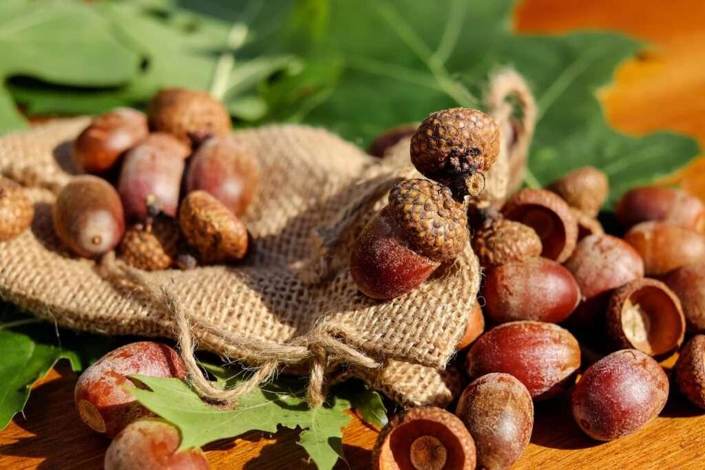 Aquarius, nuts