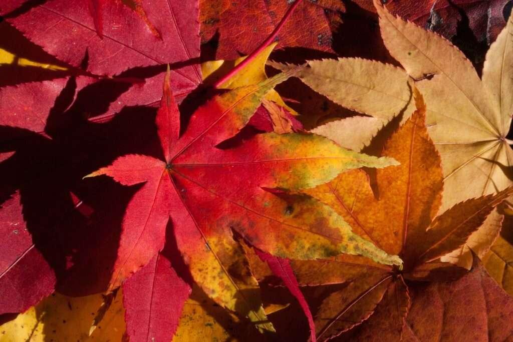 Aries, leaves