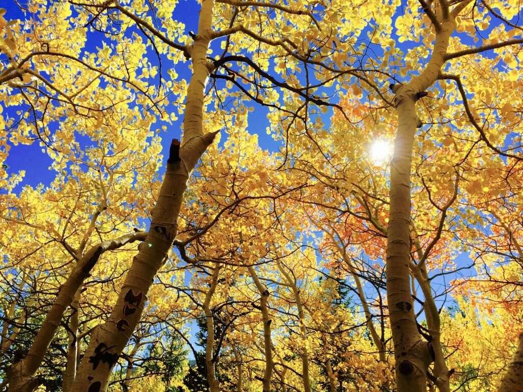 Libra, autumn