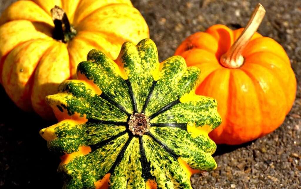 Leo, pumpkins