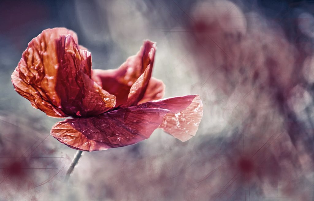 Capricorn, poppy