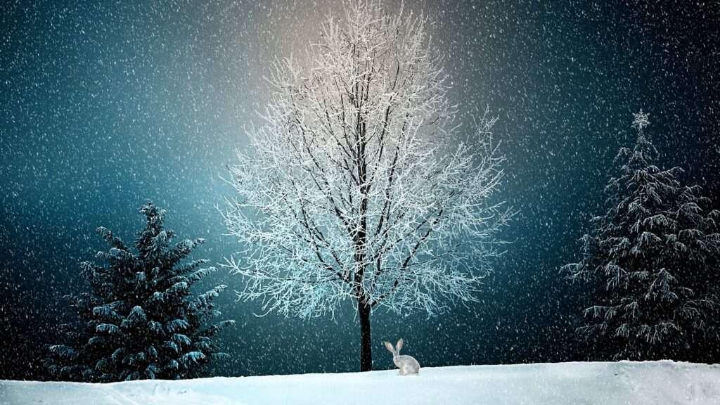 winter, Scorpio