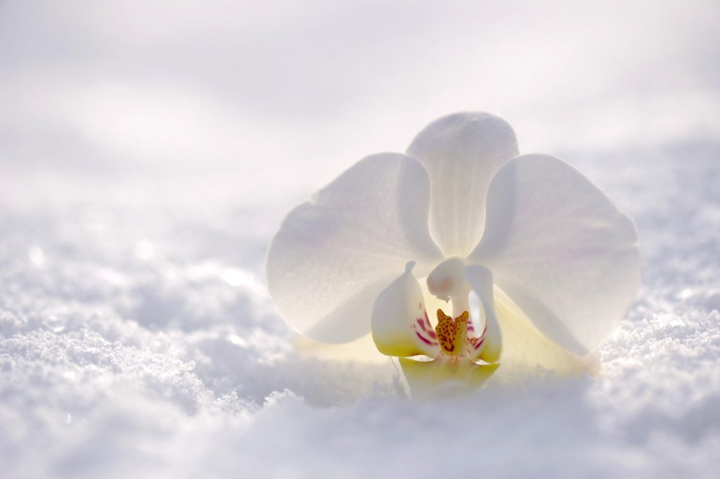 winter, Libra