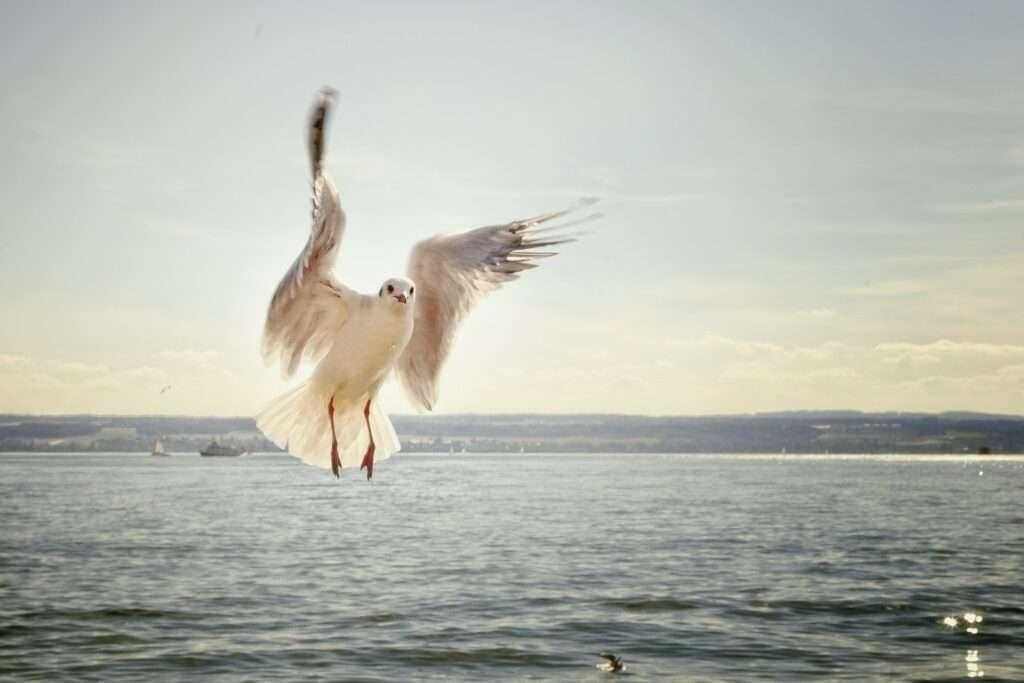 Libra, air