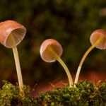 mushrooms, Virgo