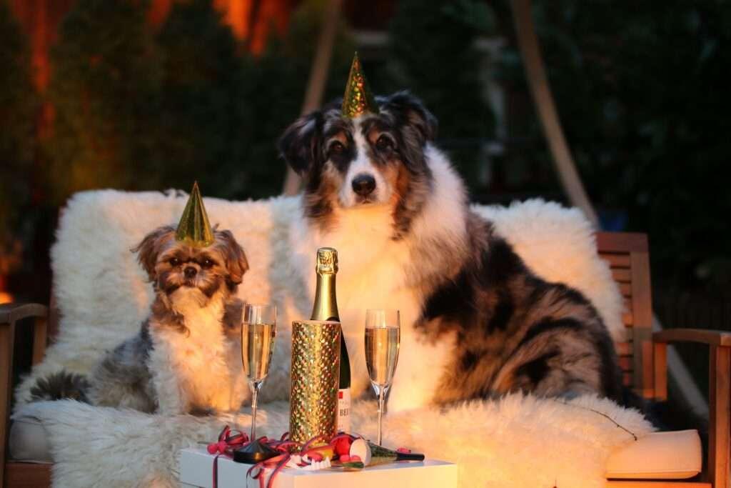 New Year, Scorpio