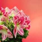 Libra, spring flowers
