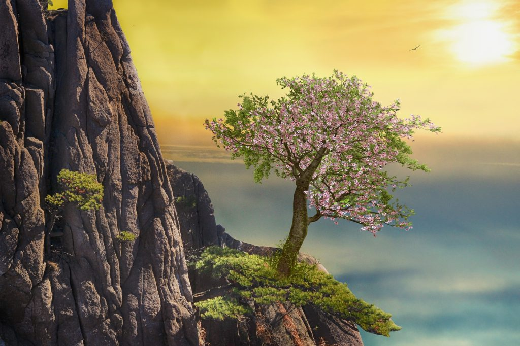 Aries, mountain, tree