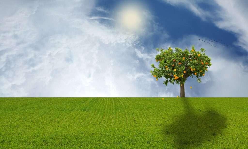 Taurus, tree