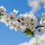 Libra, spring