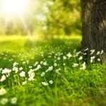 Virgo, spring