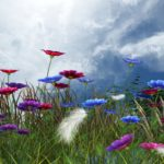 spring, astrology podcast, Sun Taurus
