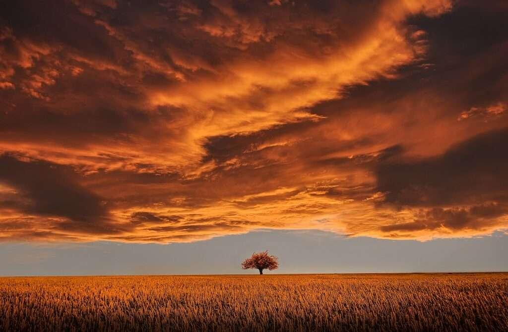 Capricorn, tree at sunset