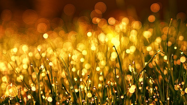 grass, sunlight, Libra