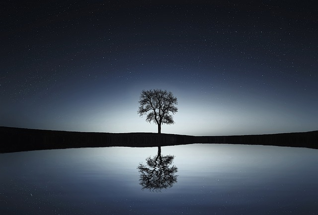 tree, reflection, Gemini