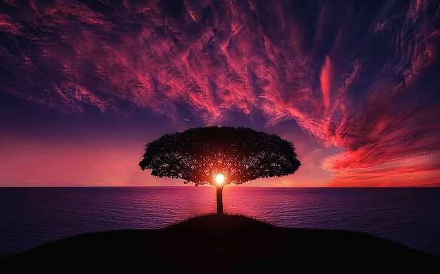 tree, Scorpio