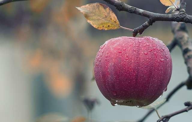 Taurus, apple