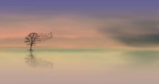 Libra, dawn