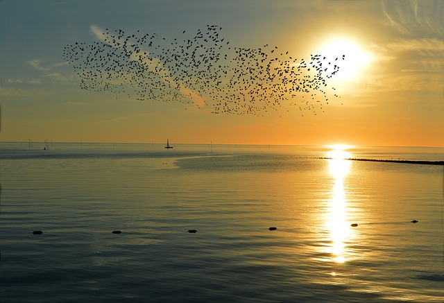 birds, sunset, Pisces