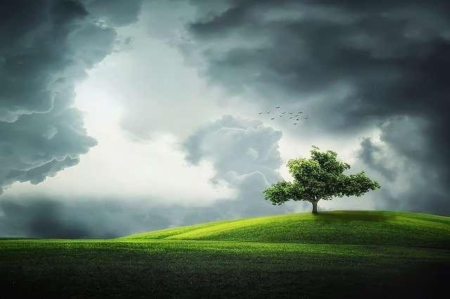 Capricorn, tree