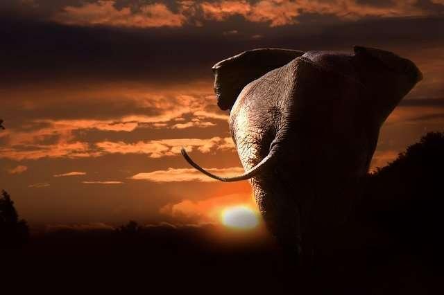 Sun trine Jupiter, elephant, sunset