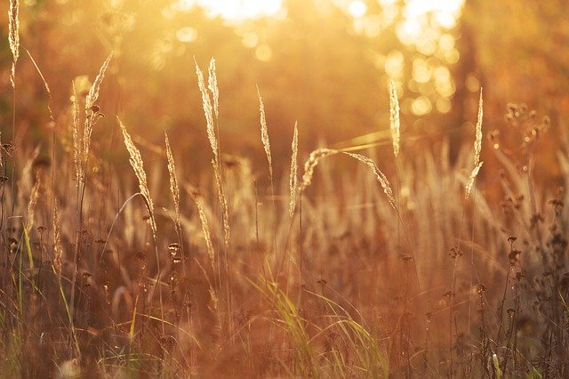 Virgo, April 2021, grass