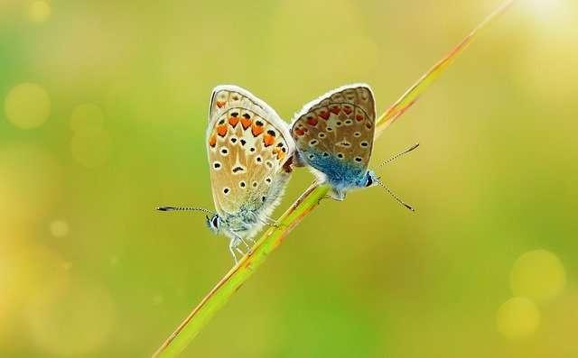 Gemini, April 2021, butterfly