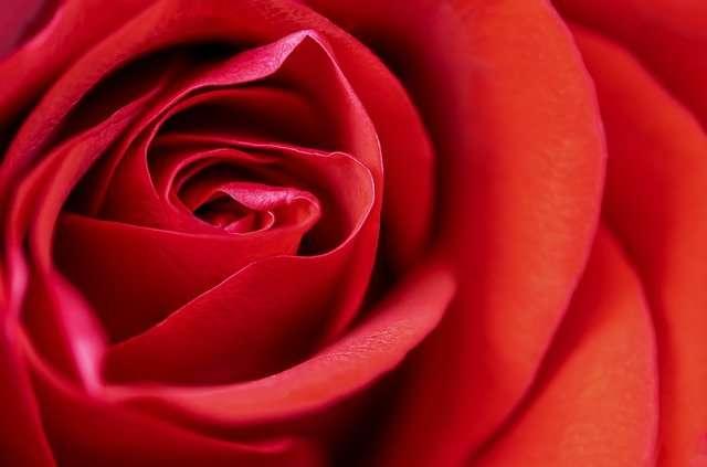 Aries, April 2021, red rose