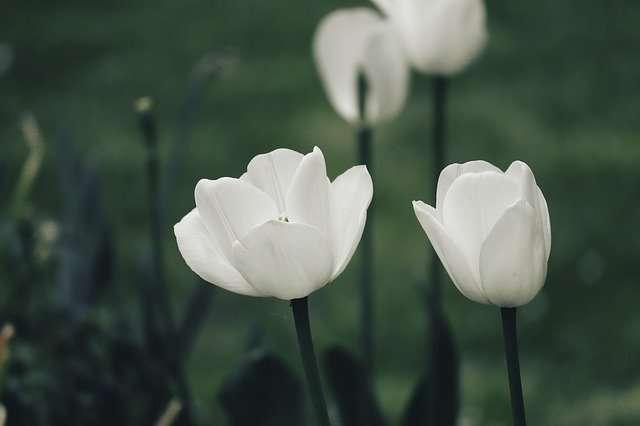Capricorn, April 2021, white flowers